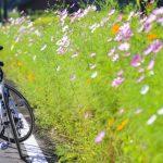 自転車で日本一周してみたい!期間どれくらい必要?費用はどれくらいかかる?