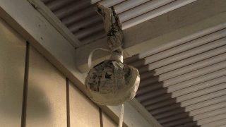 アシナガバチの巣を作らせないための最も簡単な方法!ダミーの巣を設置した結果は?
